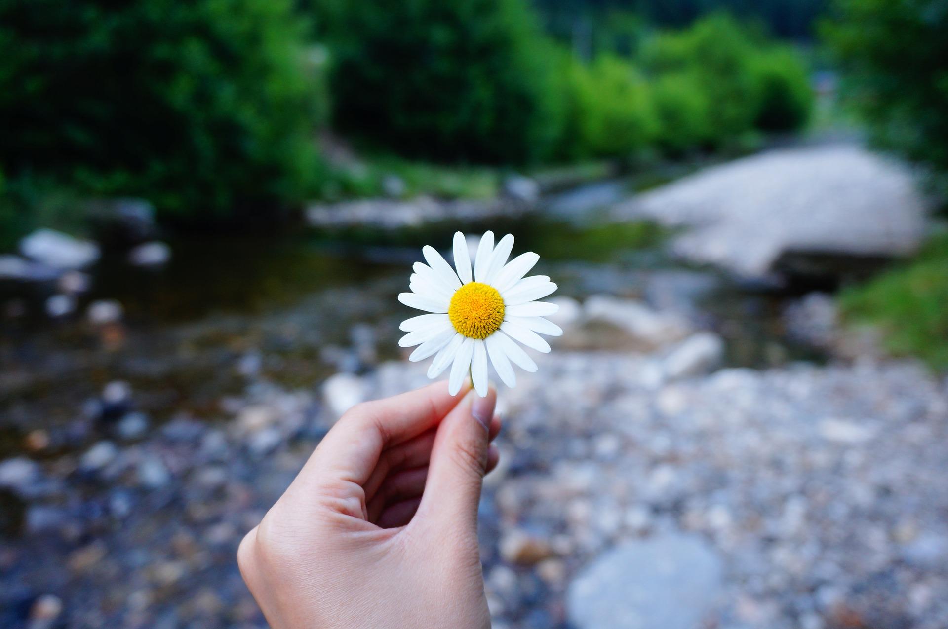flower-2222058_1920