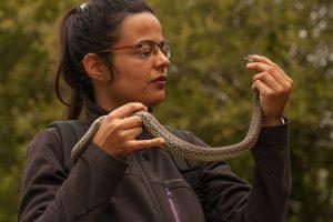 Cobras – Desmistificar o medo