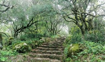Bussaco – The Enchanted Forest