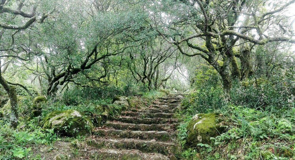 Bussaco - A Floresta Encantada