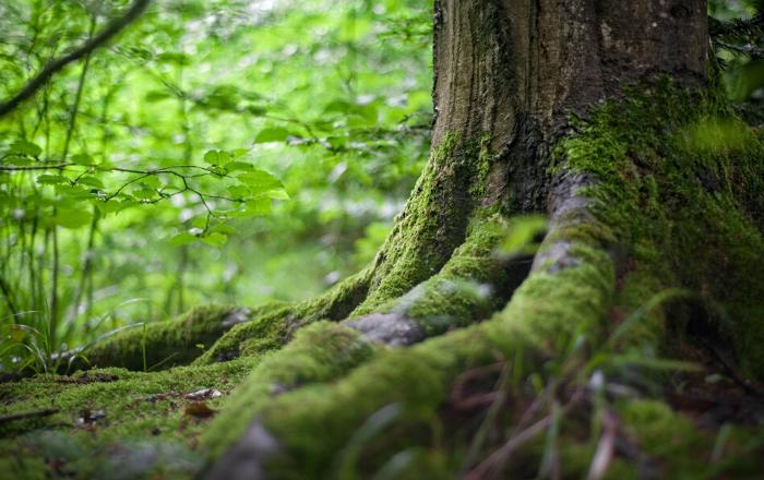 Conexão à Natureza